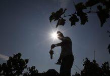 Δεσμεύσεις Αραχωβίτη για λύσεις στα προβλήματα του οινοποιητικού κλάδου στη σύσκεψη της ΚΕΟΣΟΕ