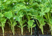 Λαχανικά - κηπευτικά