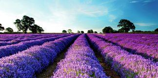 Νέος Συνεταιρισμός στη Δυτική Θεσσαλία καλλιεργητών αρωματικών φυτών