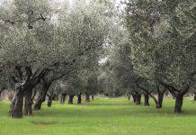 Θησαυρός βιοποικιλότητας µε δέντρα 2.500 ετών