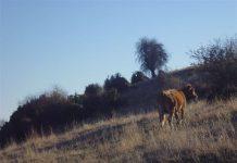 Προβληματισμός στους κτηνοτρόφους του όρους Όθρυς
