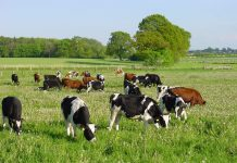 ΠΕ Έβρου: Καταστάσεις πληρωμής για βιολογική κτηνοτροφία