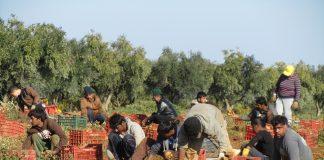 Kαι με περυσινή δήλωση ΟΣΔΕ η βεβαίωση για μετακλητούς εργάτες γης
