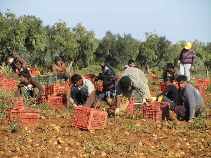 Επιστρέφονται οι εγγυητικές επιστολές αγροτών για απασχόληση ξένων αγρεργατών