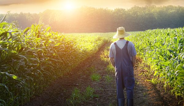 Ανατροπές στον ΕΝΦΙΑ των αγροτεμαχίων φέρνουν οι νέες αντικειμενικές