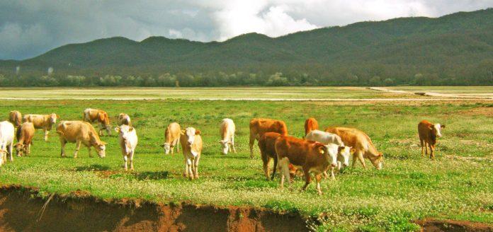 Φάρμα Φαρμάκη - Κατρή: Ένα πρότυπο της σύγχρονης ελληνικής κτηνοτροφίας