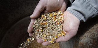 Σταθερές οι τιμές ζωοτροφών παρά την συνεχή υποβάθμιση της κτηνοτροφίας