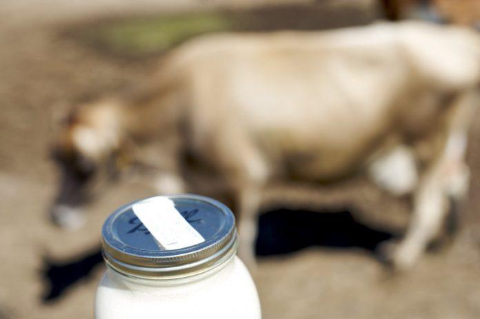 Νέα πρόστιμα από τον ΕΛΓΟ σε μεταποιητές γάλακτος