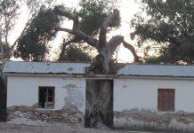 Οδοιπορικό: Η «Ύπαιθρος Χώρα» στην Ηλεία