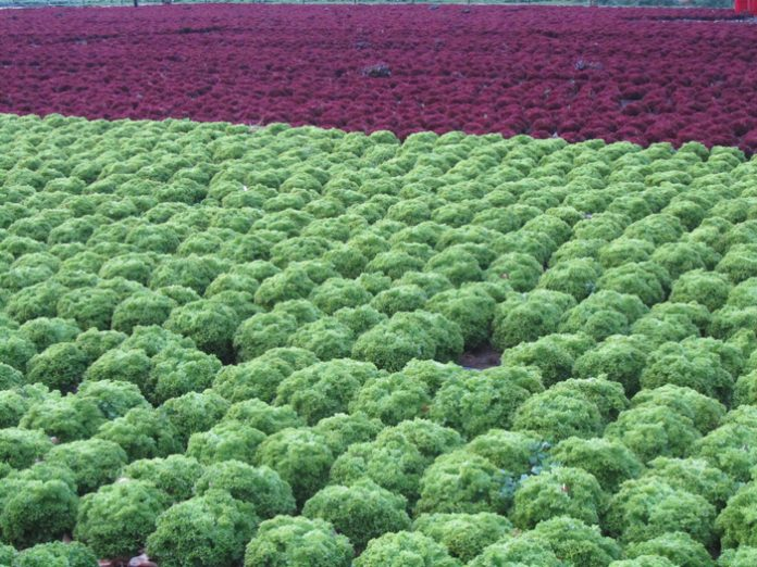 Μείωση 30% στη μελλοντική παραγωγή λαχανικών στη Νότια Ευρώπη προβλέπει μελέτη