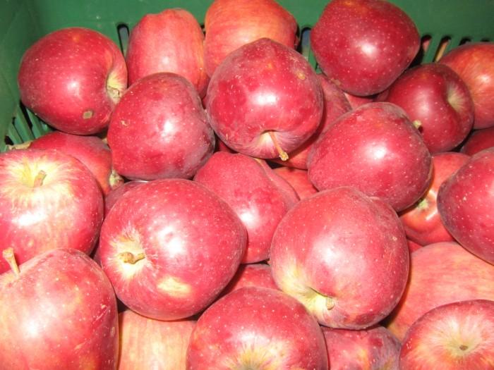 μηλοπαραγωγοί Αρκαδία