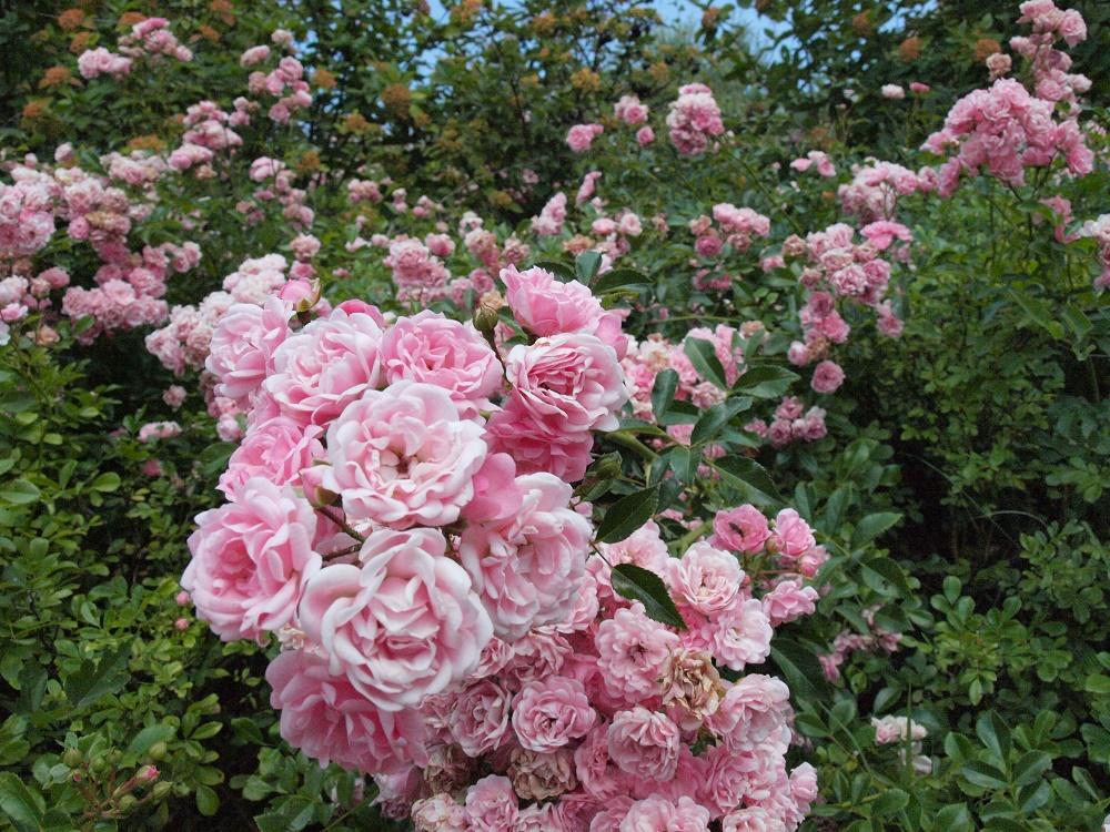 Οι κρυμμένοι θησαυροί του Κιλκίς Βοτανικός κήπος Κρουσίων