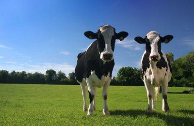 Τα οφέλη της παραγωγής βιοαερίου από κτηνοτροφικά απόβλητα