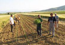 ΠΑΣΟΚ - ΔΗΜΑΡ: Η Κυβέρνηση με το ασφαλιστικό Νομοσχέδιο που προωθεί αφανίζει την αγροτική τάξη