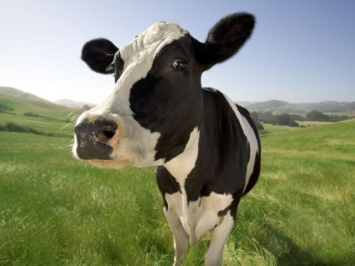Έκτακτη ενίσχυση σε κτηνοτρόφους άνω των 2 εκ. ευρώ