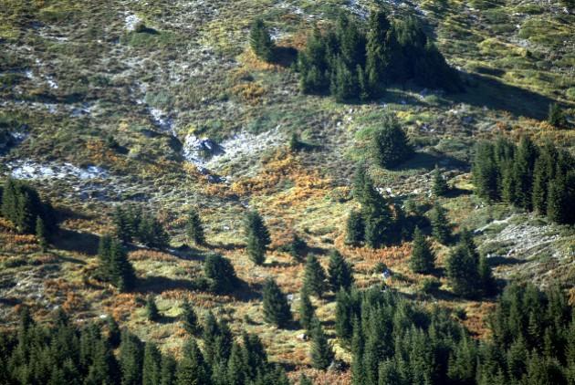 ΣτΕ:Αναδιατύπωση άρθρων σχεδίοΠ.Δ. για δασικές εκτάσεις