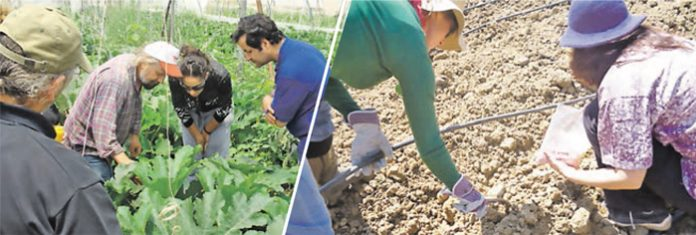 Εναλλακτικό Σχολείο προετοιµάζει τους αυριανούς βιοκαλλιεργητές