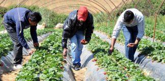 Αχτσιόγλου: Μείωση του πρόστιμου αδήλωτης εργασίας εάν προηγηθεί πρόσληψη