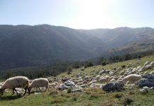 Κτηνοτρόφοι στα όρια της επιβίωσης