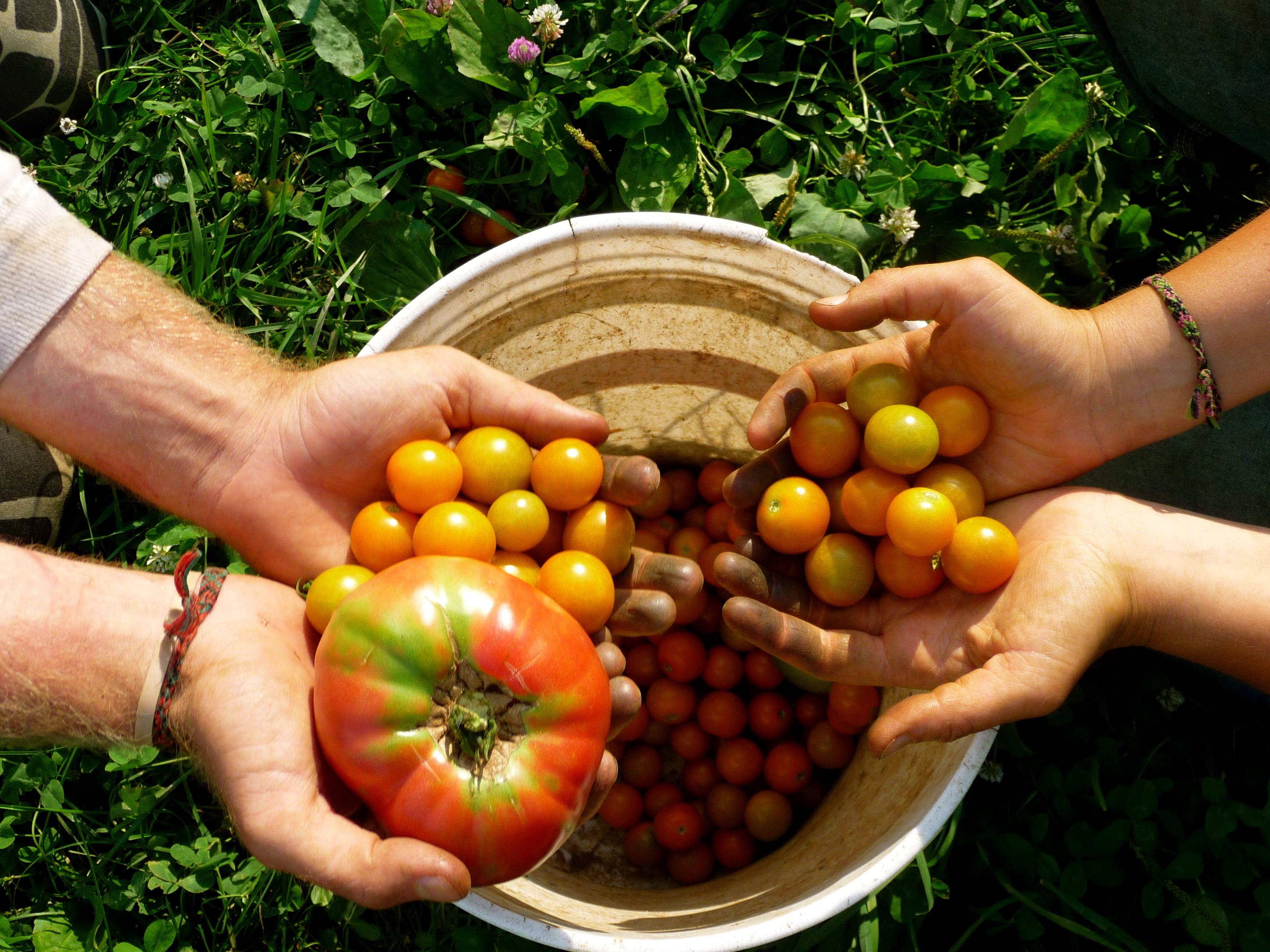Επίσκεψη των Βιοκαλλιεργητών Αττικής στα γραφεία της «ΥΧ»
