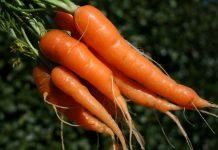 Η στροφή στην τυποποίηση των καρότων θα φέρει έσοδα