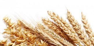 Ποια θα είναι η συνδεδεμένη ενίσχυση στο σκληρό σιτάρι