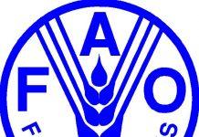Άγγιξαν υψηλά διετίας οι διεθνείς τιμές των τροφίμων τον Ιανουάριο, σύμφωνα με το FAO