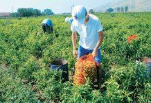Έτοιμο το σχέδιο του ΥΠΑΑΤ για παραχώρηση φθηνής αγροτικής γης