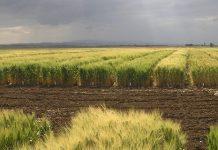 Από την έρευνα, στο χωράφι - Η τεχνολογία στην υπηρεσία των παραγωγών