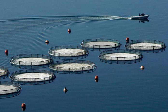 Πρώτη η Ελλάδα στις υδατοκαλλιέργειες