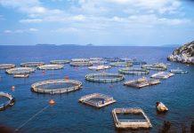 Άνοδος στις εξαγωγές ιχθυηρών από την Ήπειρο
