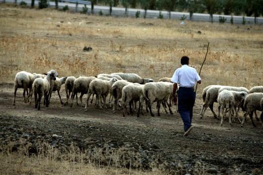 Τον Αποστόλου συναντούν οι Λαρισαίοι κτηνοτρόφοι