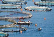 Ζωηρό ενδιαφέρον για Nηρέα- Σελόντα, οκτώ οι μη ενδεικτικές προσφορές