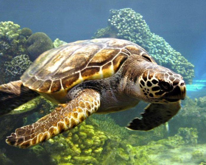 Έξι νεκρές θαλάσσιες χελώνες ξεβράστηκαν στον Θερμαϊκό Κόλπο τον Δεκέμβριο