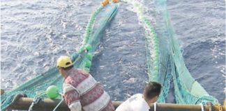 Εντατικοποίηση ελέγχων για παραβάσεις αλιείας με βιντζότρατα και αλιείας πελαγικών ψαριών