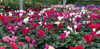 Άνθη, φυτά με κέρδη παρά την κρίση