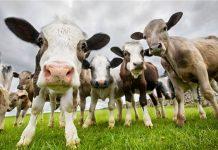Το αποτύπωμα της ζωικής παραγωγής στο πρόβλημα εκπομπών αζώτου