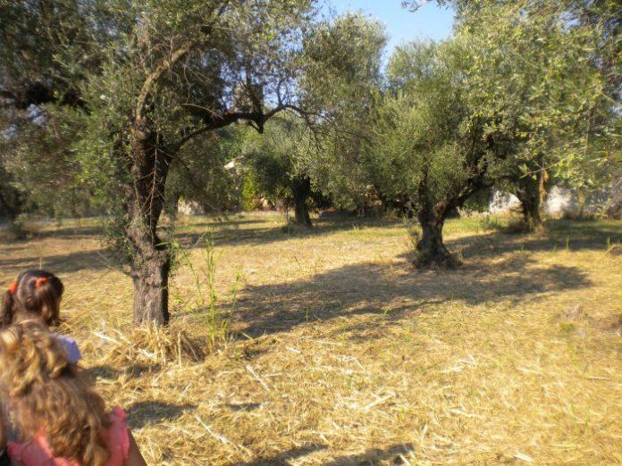 Τι θα γίνει με τα εισαγόμενα φυτά από την Απούλια και άλλες περιοχές που είναι «ύποπτα» στην Xylella;