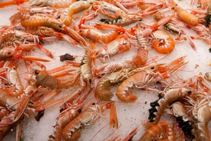 Ήπειρος: Απαγόρευση αλιείας καραβίδας
