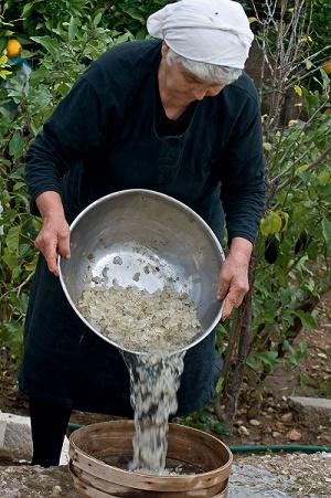 Παραδοσιακό καθάρισμα της Μαστίχας Χίου (video)