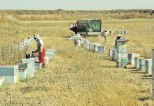Μέλι Θάσου: Η ποιότητα οδήγησε στην ανάπτυξη