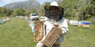 Πανευρωπαϊκή έρευνα για τη μελισσοκομία