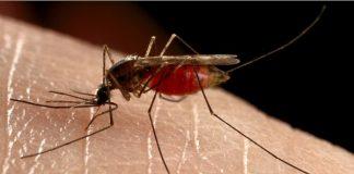 Π.Ε. Ημαθίας: Οδηγίες για την αντιμετώπιση των κουνουπιών