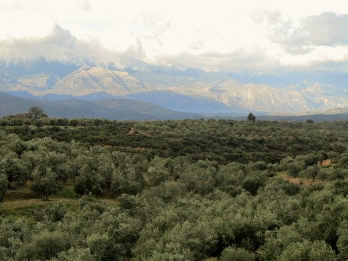 Συμφωνία Enterprise Greece και Επιμελητηρίου Λακωνίας για την προώθηση λακωνικών προϊόντων
