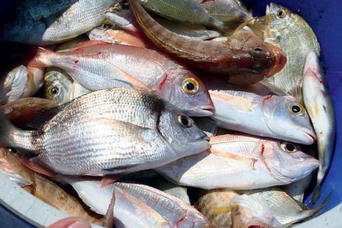Οι ελλείψεις κτηνιάτρων στην Αττική, φέρνουν επιβαρύνσεις τελών στους εξαγωγείς, όπως εκτιμά ο ΠΣΕ