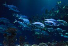 Υπεραλιεύεται το 96% των ιχθυαποθεμάτων της Μεσογείου