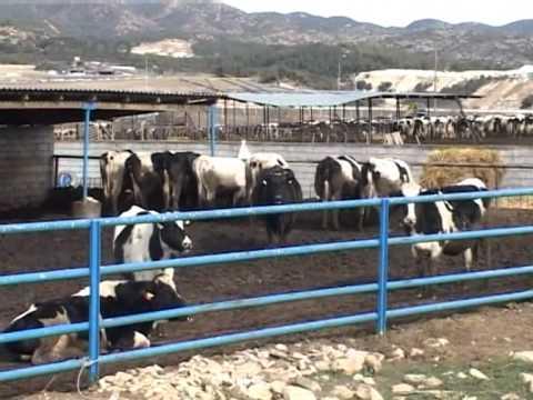Περιφέρεια Ηπείρου: Απλοποίηση διαδικασιών νομιμοποίησης κτηνοτροφικών εγκαταστάσεων