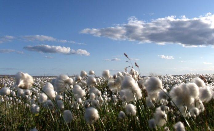 Δικτύωση επιχειρήσεων για το βαμβάκι, από το χωράφι ως το τελικό προϊόν, προωθεί η Θ. Τζάκρη