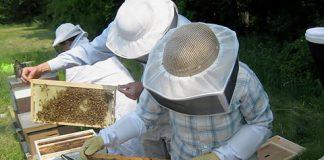 Π.Ε. Κιλκίς: Έως 28/4 οι αιτήσεις για τη μελισσοκομία