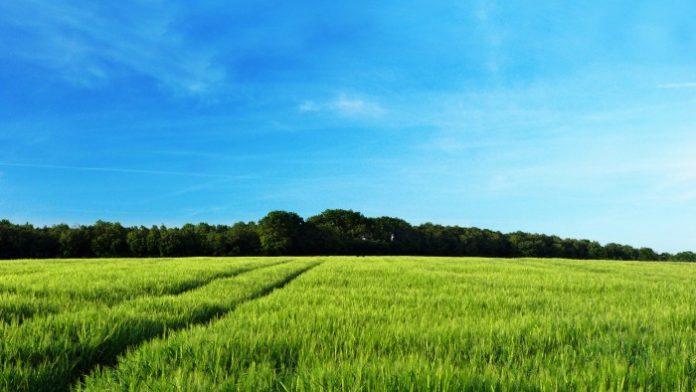 Μπιλ Γκέιτς, Ντέμι Μουρ και Google επενδύουν στους… αγρούς